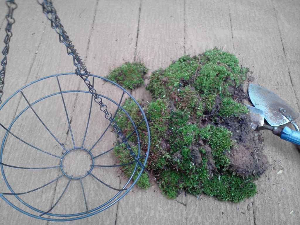 Making a moss lining for a hanging basket