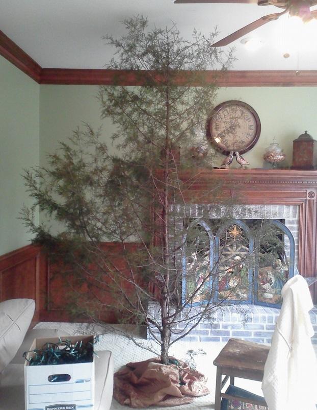 Cedar Christmas tree