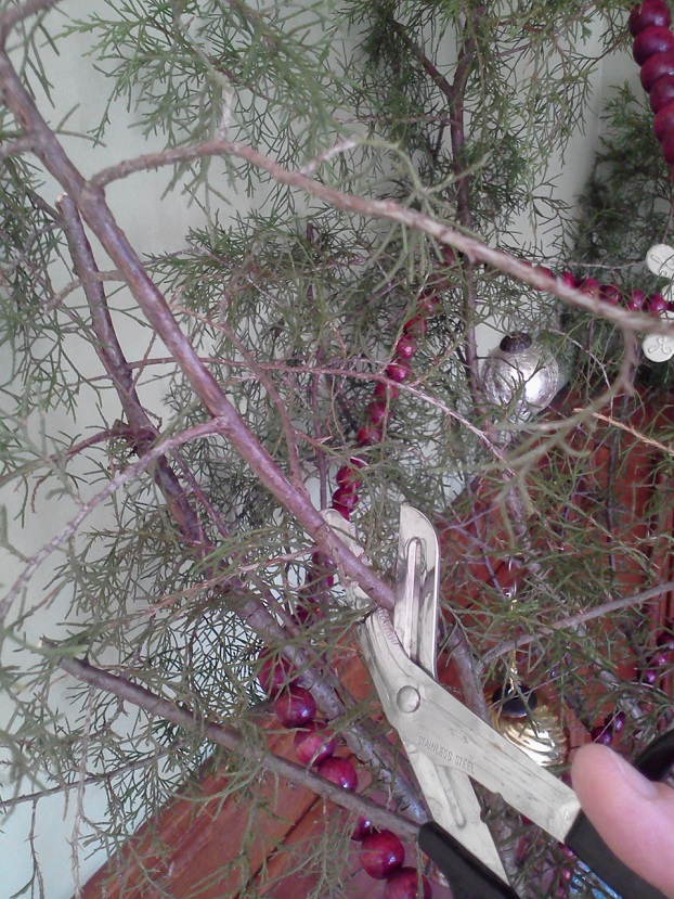 disposing of Christmas tree