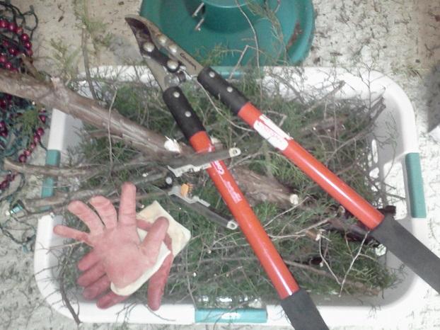 Christmas tree compost